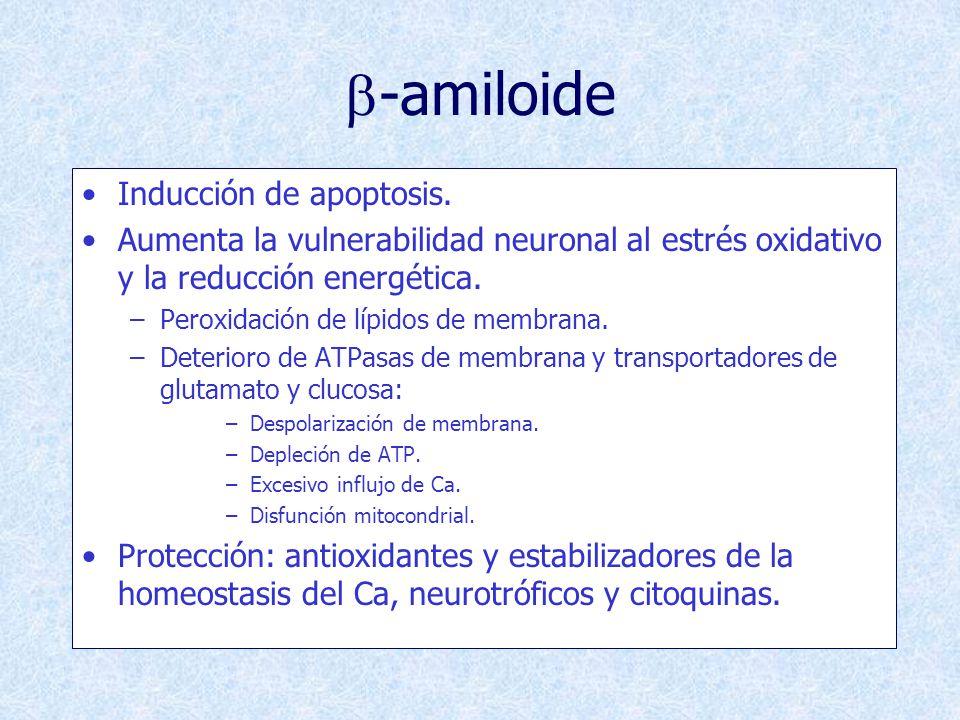 b-amiloide Inducción de apoptosis.
