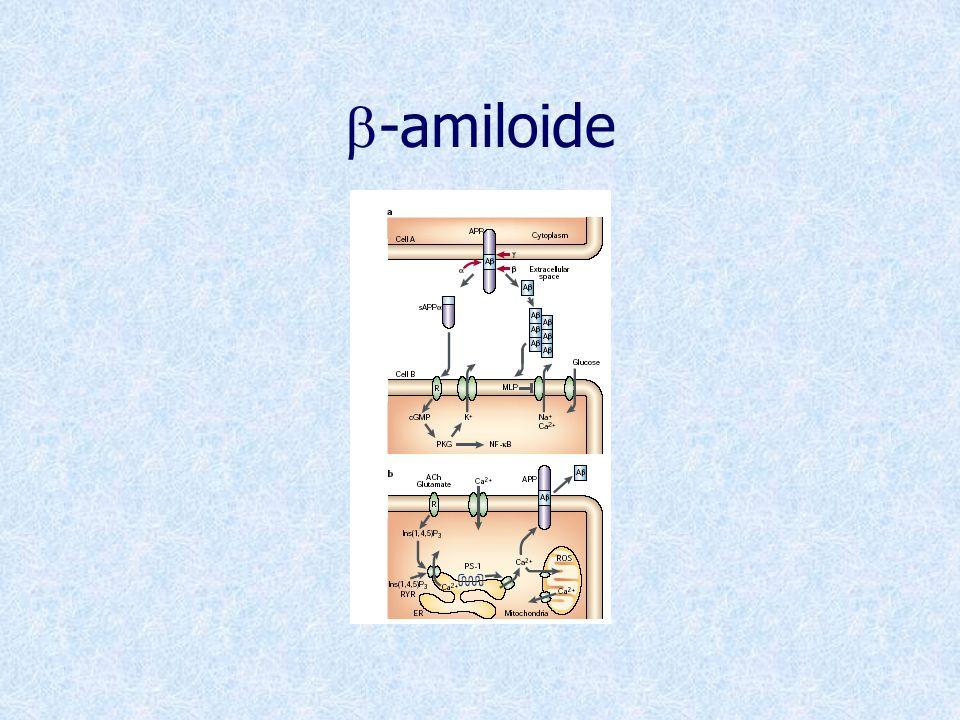 b-amiloide
