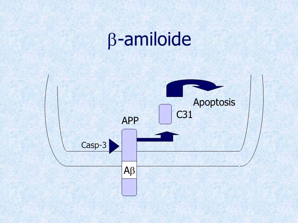 b-amiloide Ab APP Casp-3 C31 Apoptosis