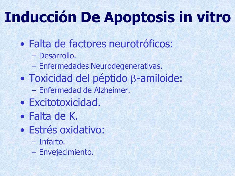 Inducción De Apoptosis in vitro