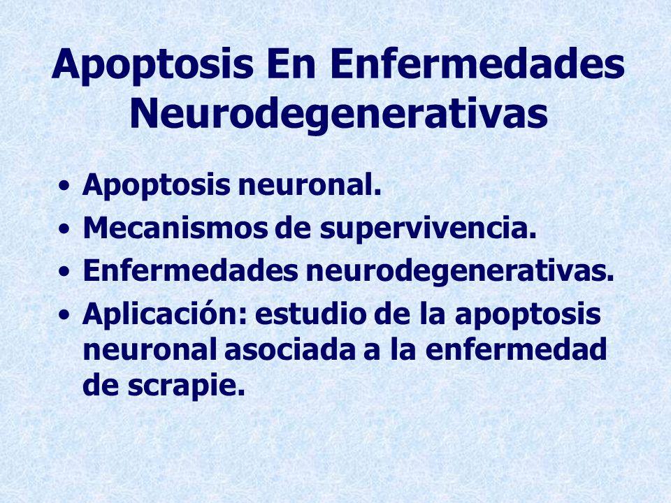 Apoptosis En Enfermedades Neurodegenerativas