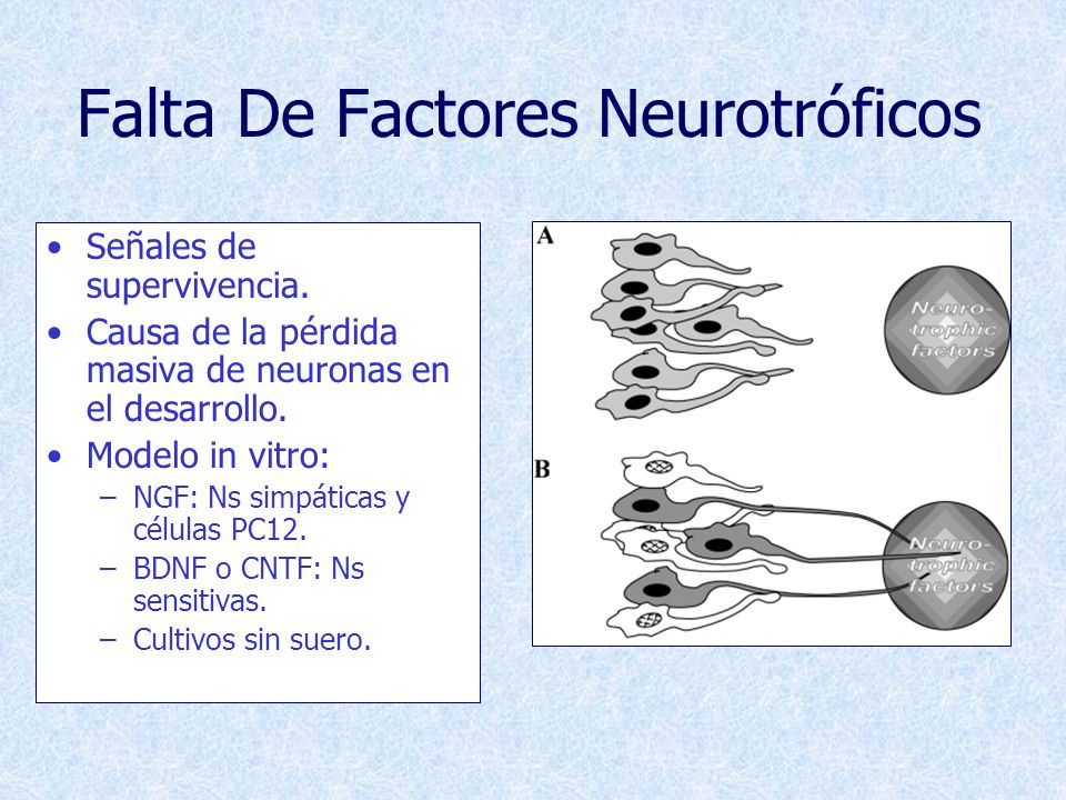 Falta De Factores Neurotróficos