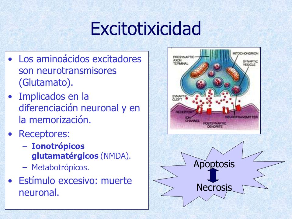 Excitotixicidad Los aminoácidos excitadores son neurotransmisores (Glutamato). Implicados en la diferenciación neuronal y en la memorización.