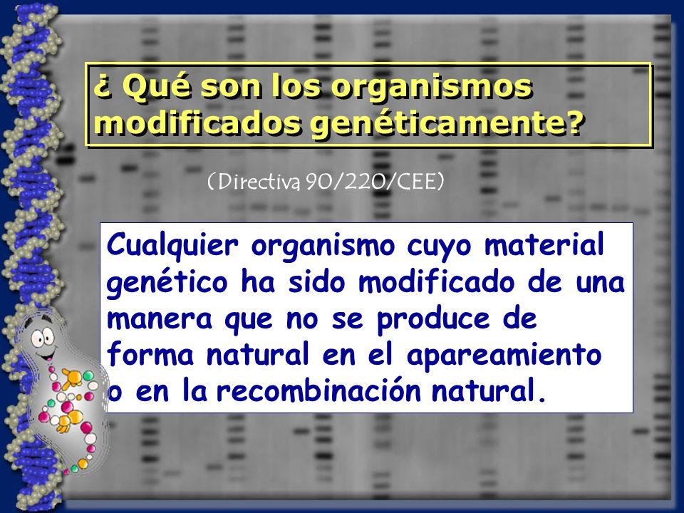 ¿ Qué son los organismos modificados genéticamente