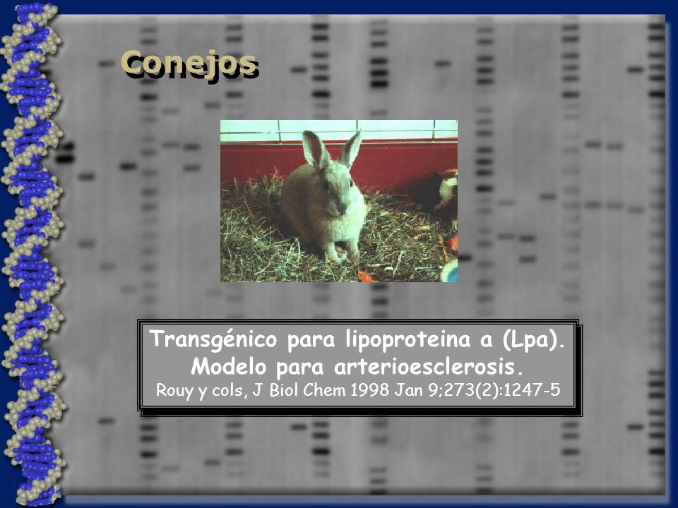 Transgénico para lipoproteina a (Lpa). Modelo para arterioesclerosis.