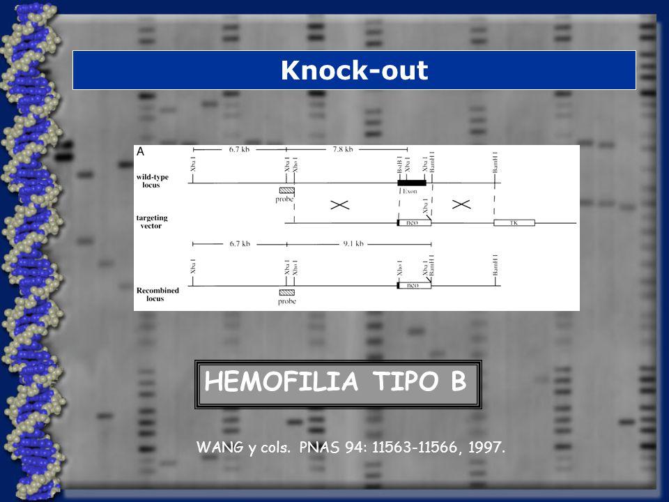 Knock-out HEMOFILIA TIPO B WANG y cols. PNAS 94: 11563-11566, 1997.