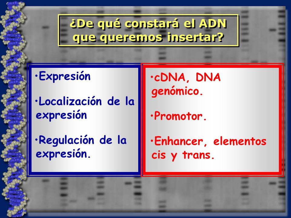 ¿De qué constará el ADN que queremos insertar