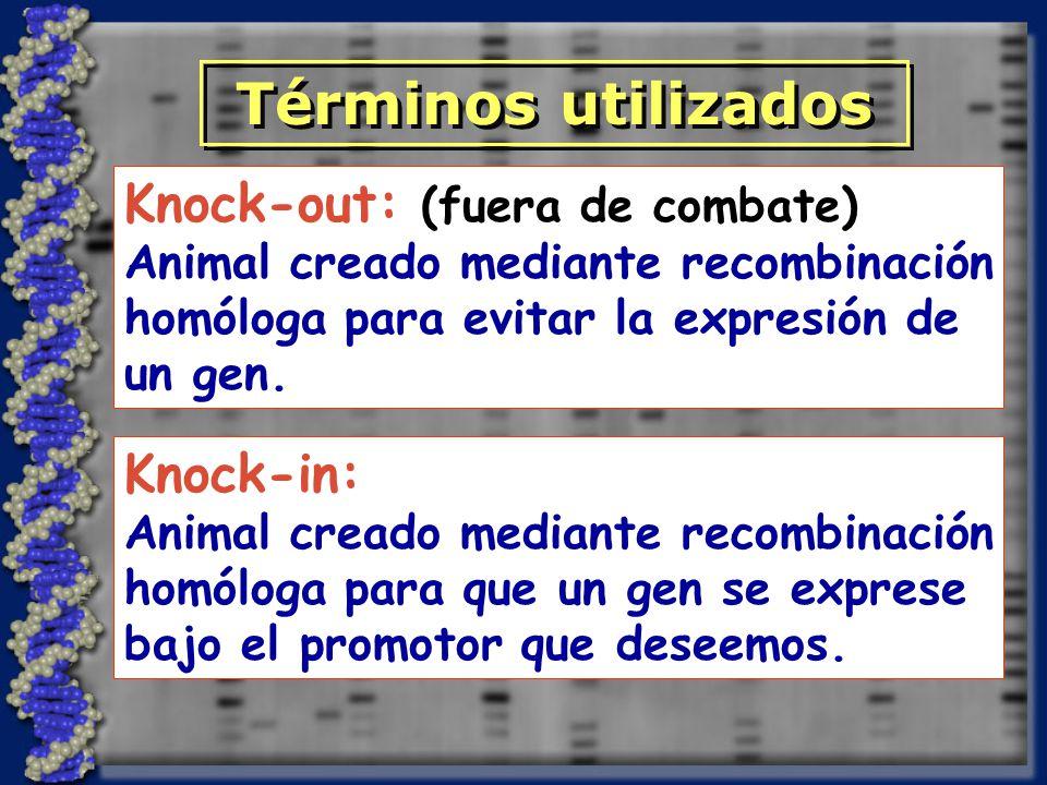 Términos utilizados Knock-out: (fuera de combate) Knock-in: