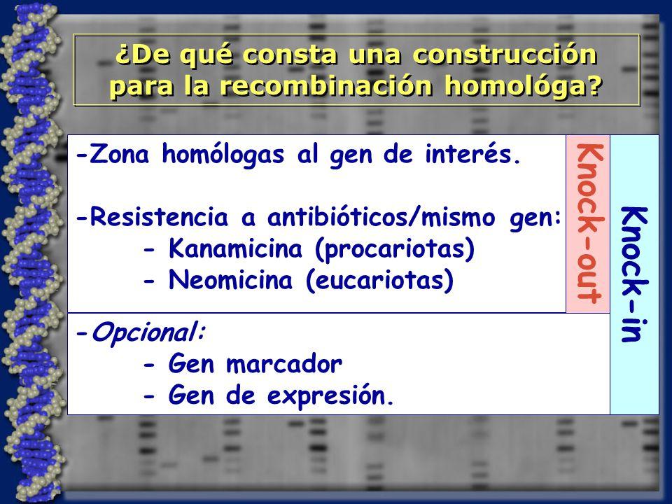 ¿De qué consta una construcción para la recombinación homológa