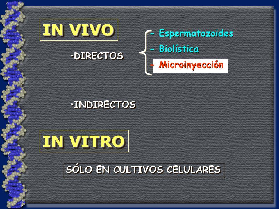 IN VIVO IN VITRO - Espermatozoides - Biolística - Microinyección