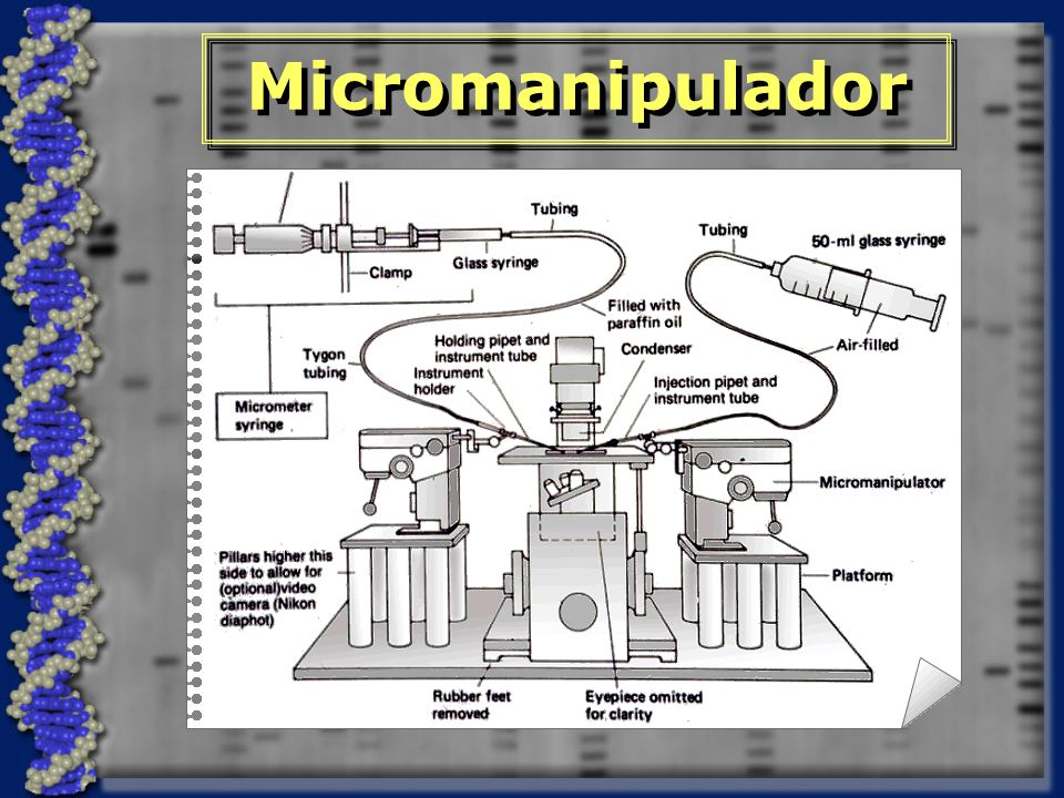 Micromanipulador