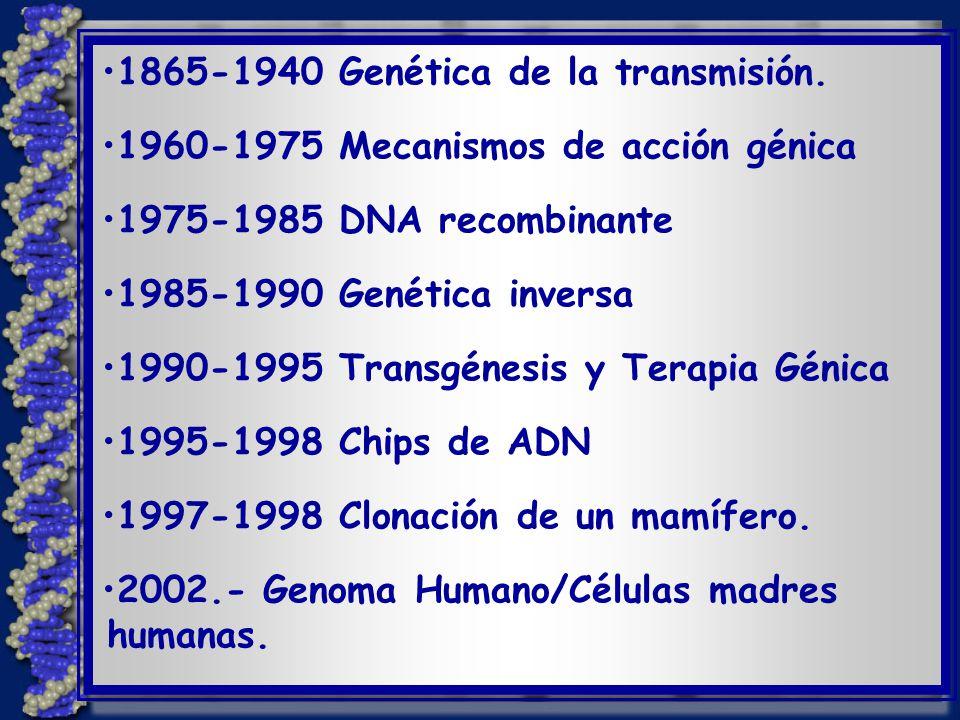 1865-1940 Genética de la transmisión.