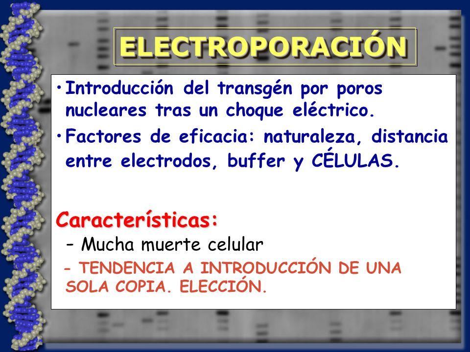 ELECTROPORACIÓN - Mucha muerte celular Características: