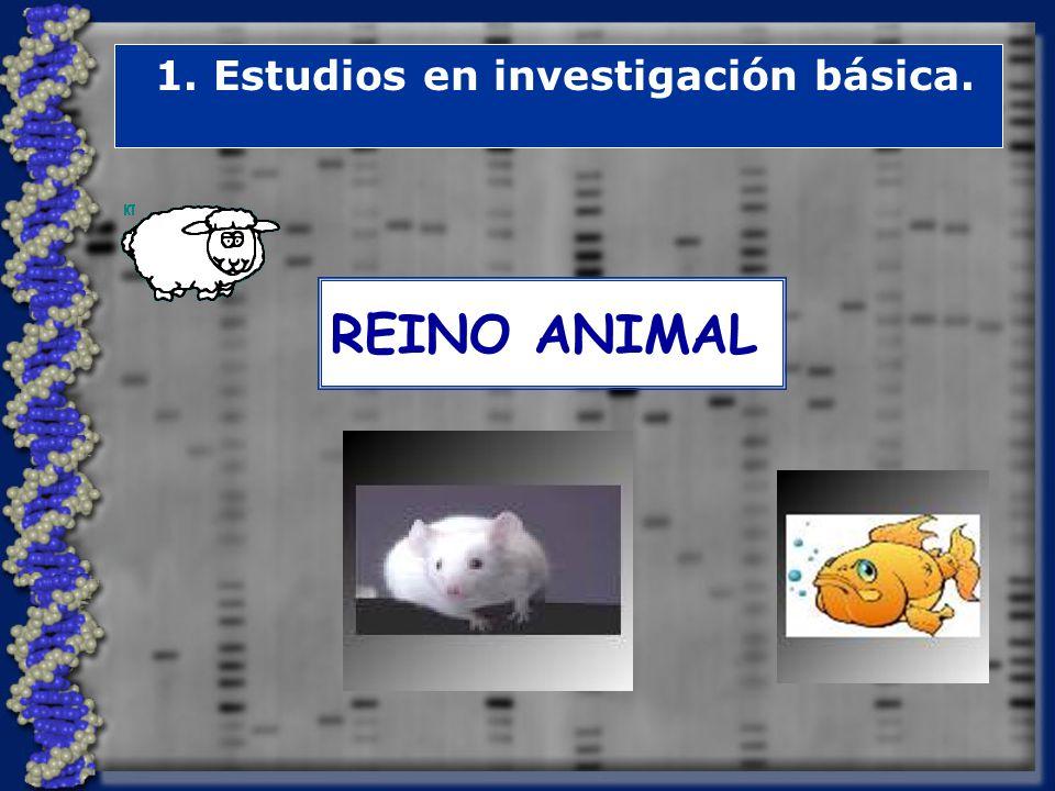 1. Estudios en investigación básica.