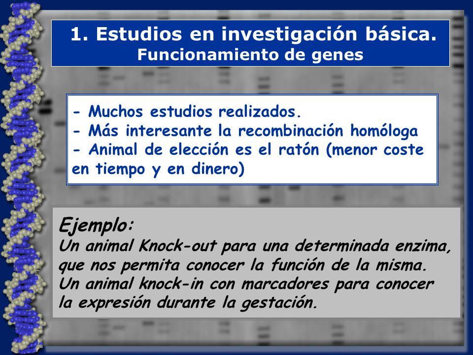1. Estudios en investigación básica. Funcionamiento de genes
