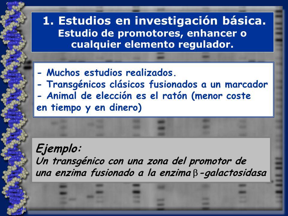 Ejemplo: 1. Estudios en investigación básica.