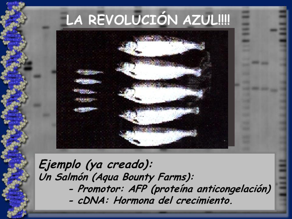 LA REVOLUCIÓN AZUL!!!! Ejemplo (ya creado):