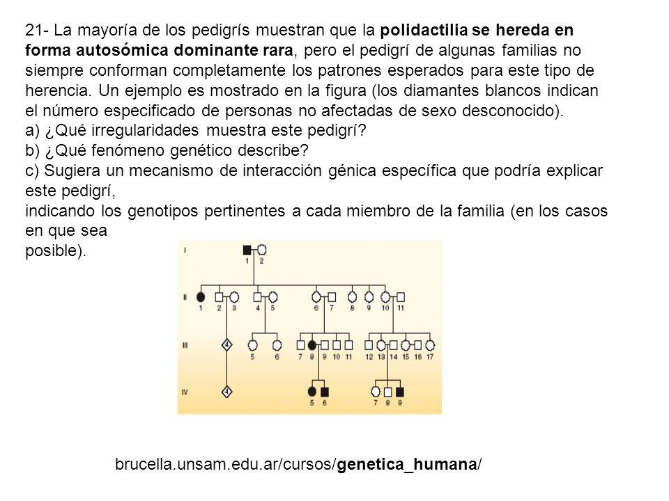 21- La mayoría de los pedigrís muestran que la polidactilia se hereda en forma autosómica dominante rara, pero el pedigrí de algunas familias no siempre conforman completamente los patrones esperados para este tipo de herencia. Un ejemplo es mostrado en la figura (los diamantes blancos indican el número especificado de personas no afectadas de sexo desconocido).