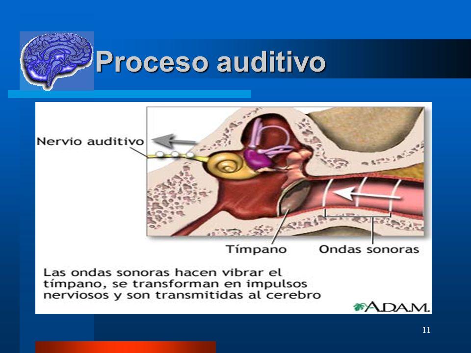 Proceso auditivo