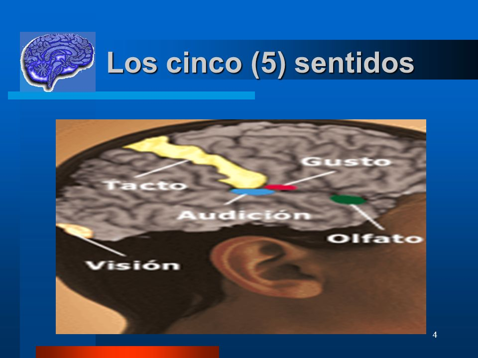 Los cinco (5) sentidos