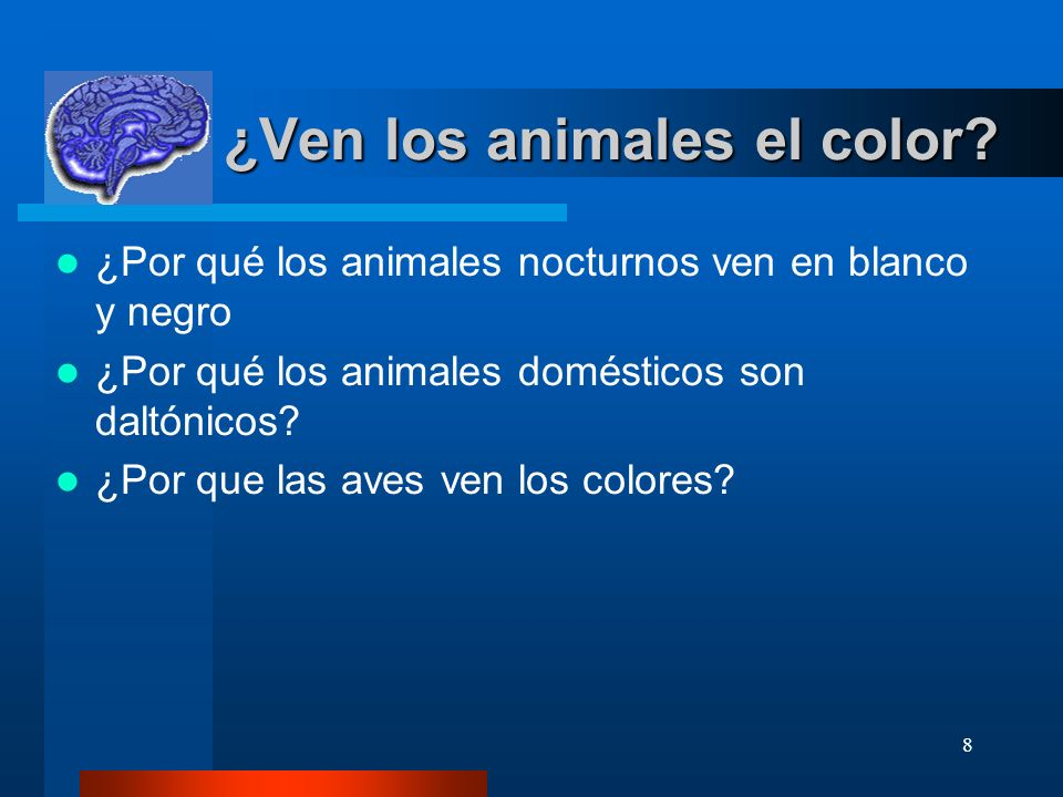 ¿Ven los animales el color