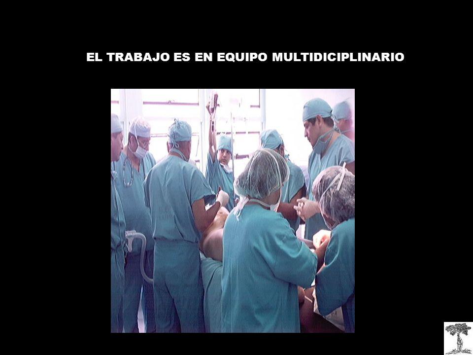 EL TRABAJO ES EN EQUIPO MULTIDICIPLINARIO