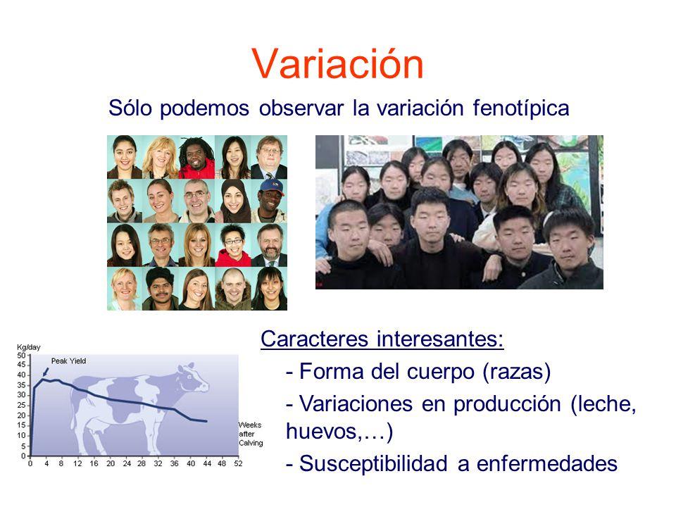 Variación Sólo podemos observar la variación fenotípica