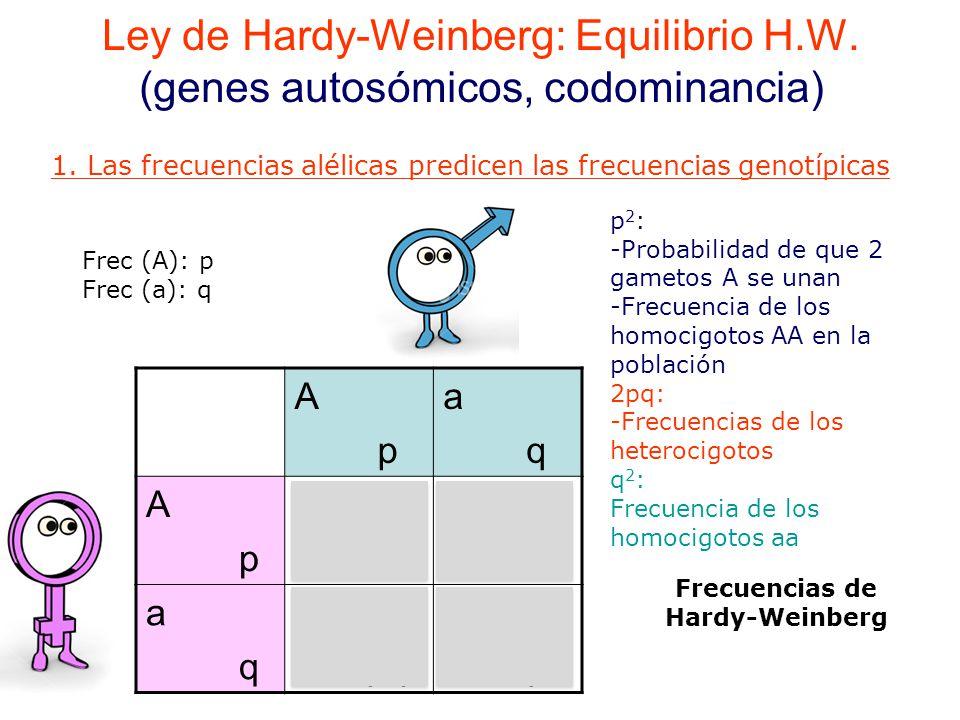 Frecuencias de Hardy-Weinberg