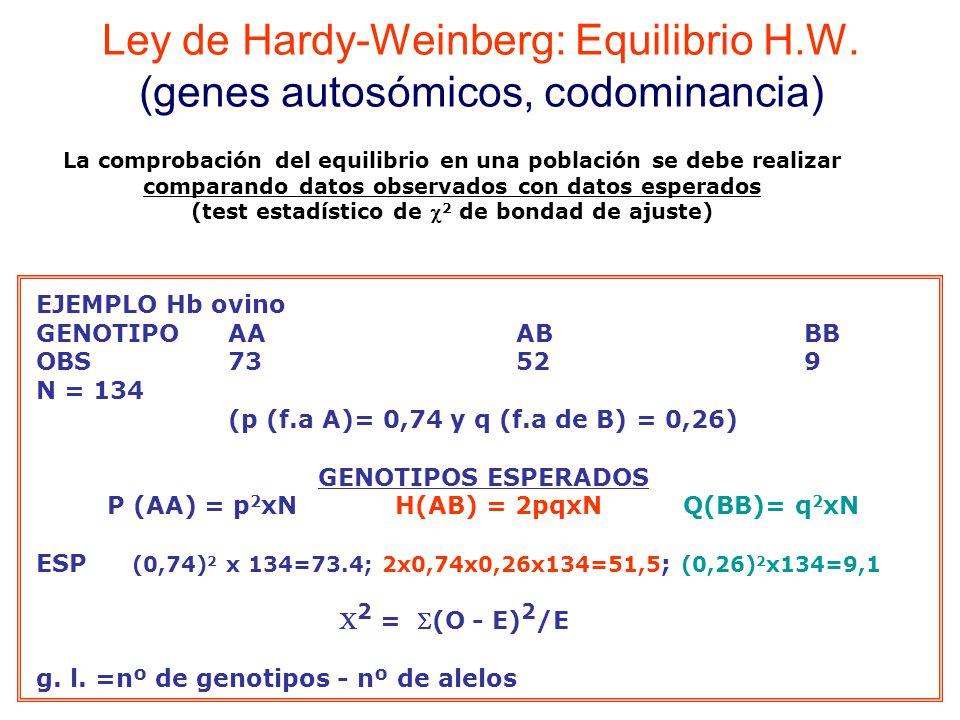 P (AA) = p2xN H(AB) = 2pqxN Q(BB)= q2xN