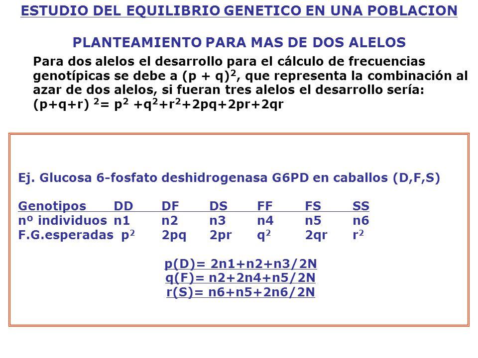 ESTUDIO DEL EQUILIBRIO GENETICO EN UNA POBLACION