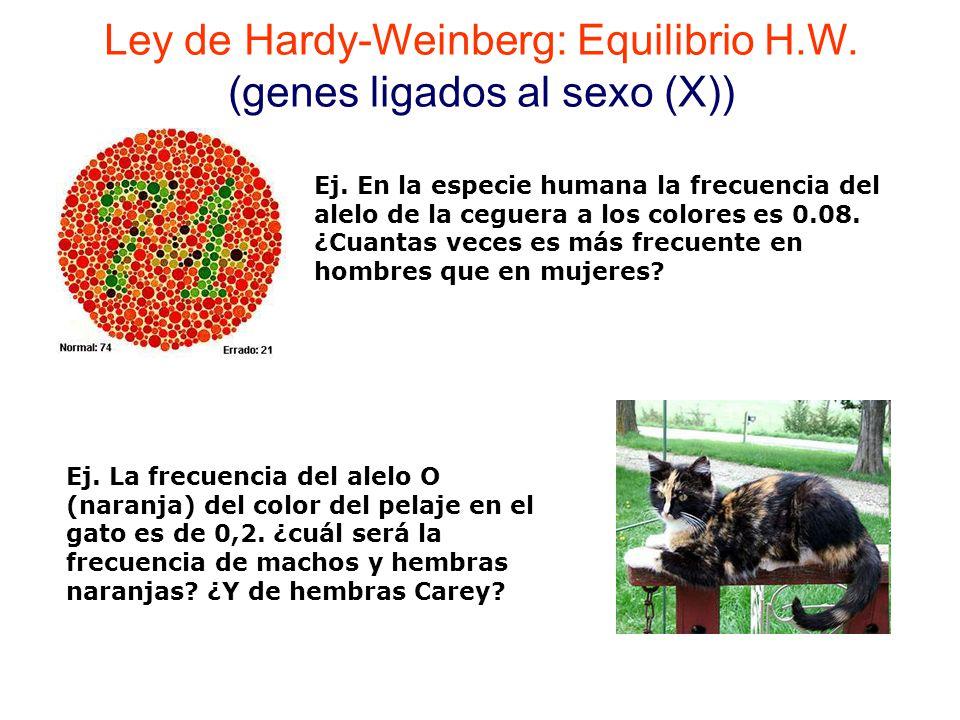 Ley de Hardy-Weinberg: Equilibrio H.W. (genes ligados al sexo (X))