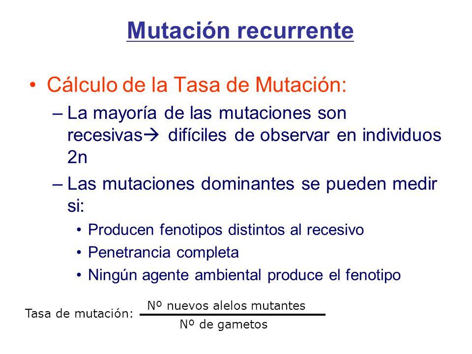 Mutación recurrente Cálculo de la Tasa de Mutación: