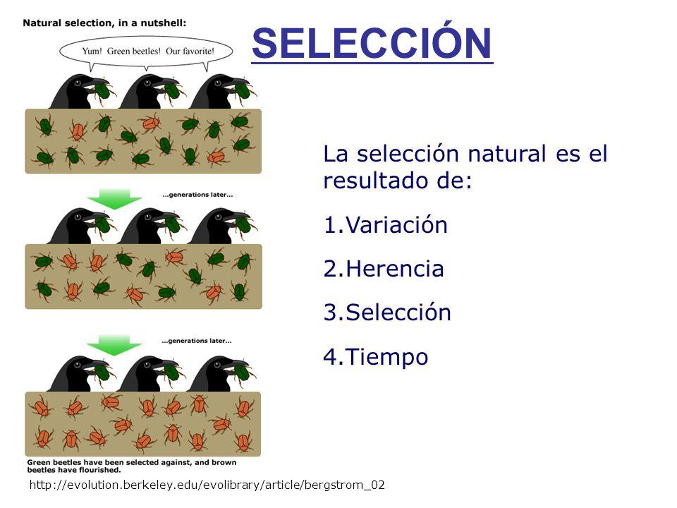 SELECCIÓN La selección natural es el resultado de: Variación Herencia