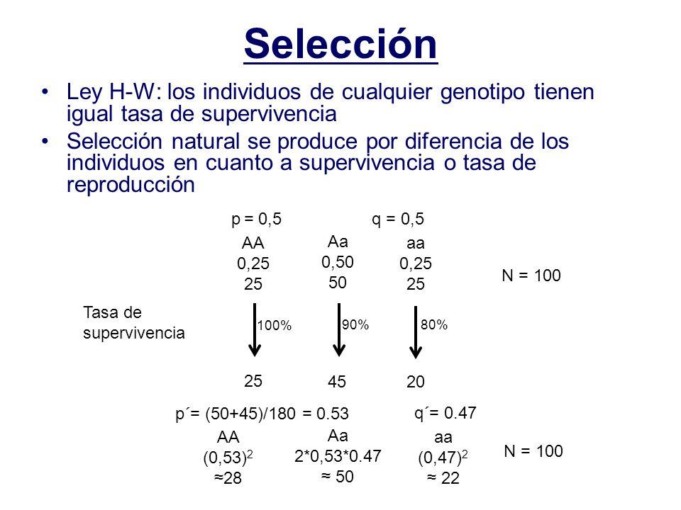 Selección Ley H-W: los individuos de cualquier genotipo tienen igual tasa de supervivencia.