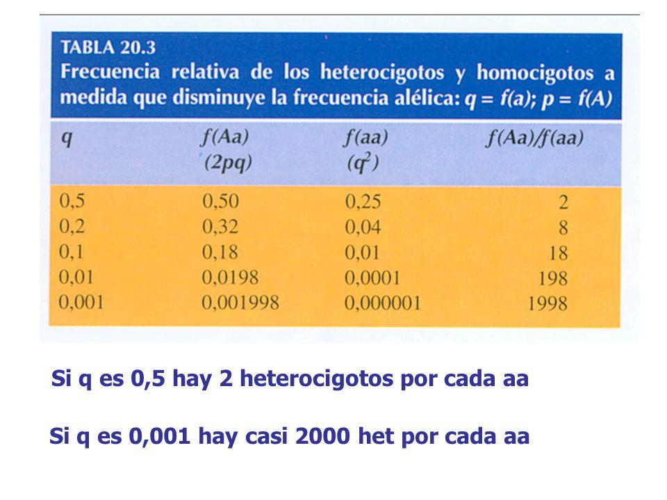 Si q es 0,5 hay 2 heterocigotos por cada aa