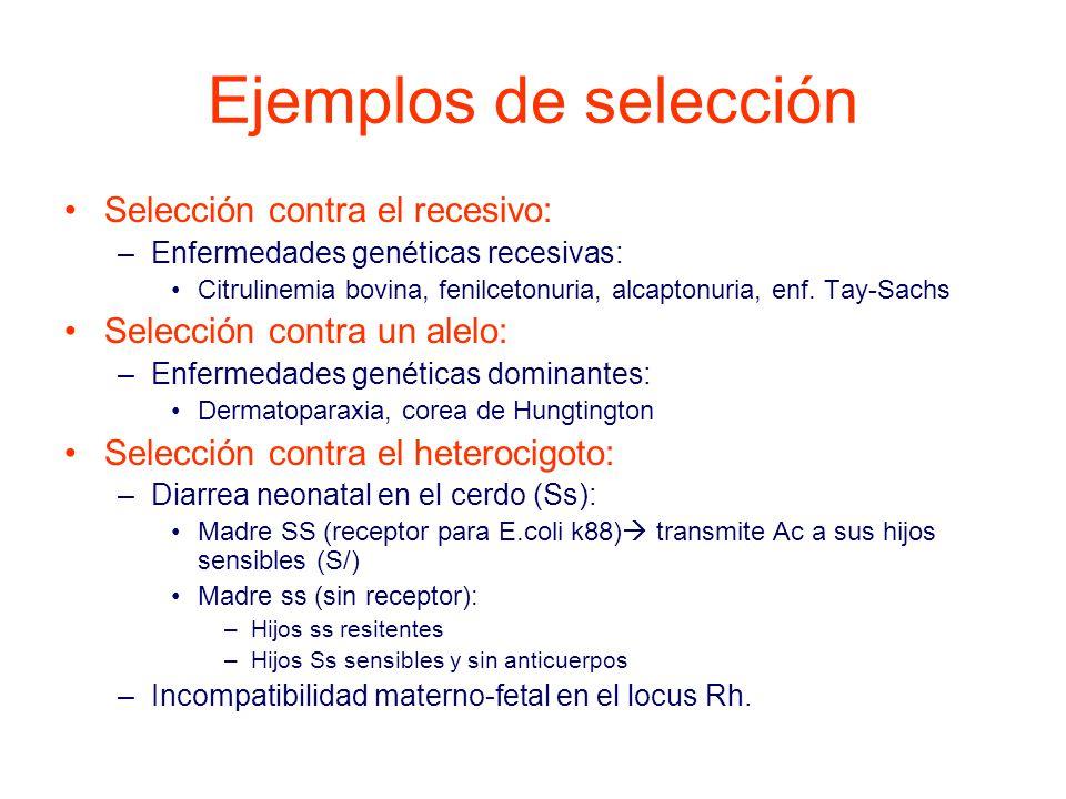 Ejemplos de selección Selección contra el recesivo:
