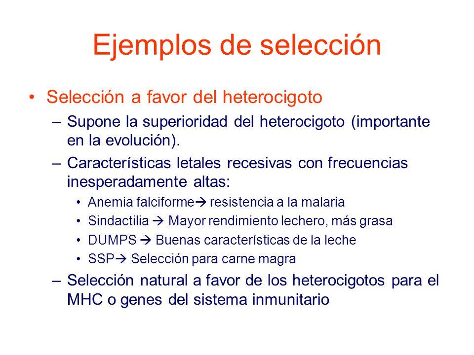 Ejemplos de selección Selección a favor del heterocigoto