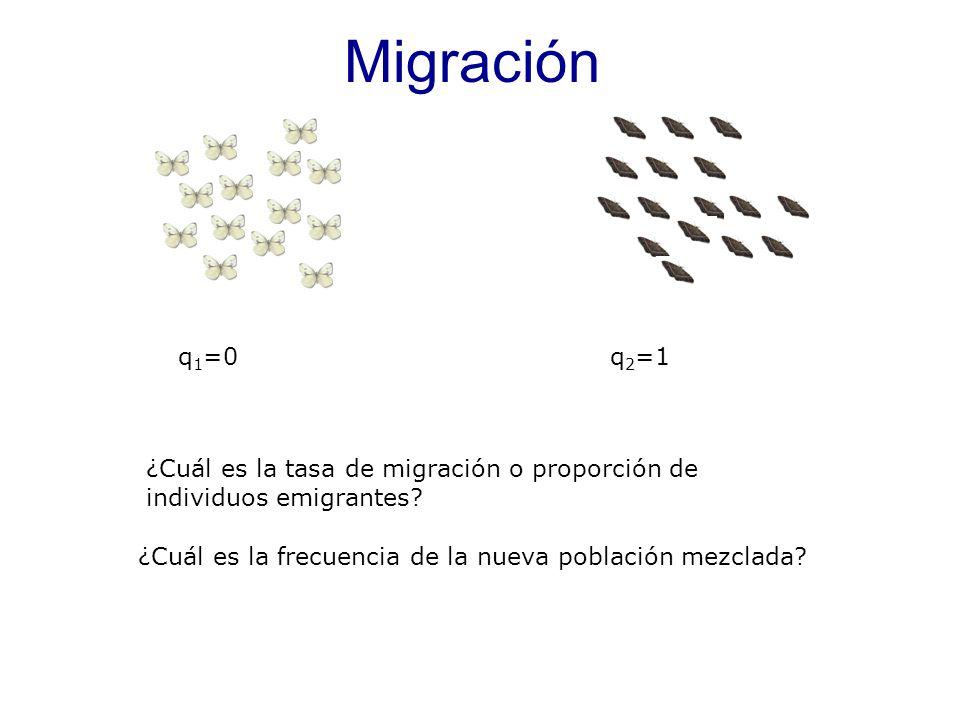 Migración q1=0. q2=1. ¿Cuál es la tasa de migración o proporción de individuos emigrantes m=6/20=0,3.