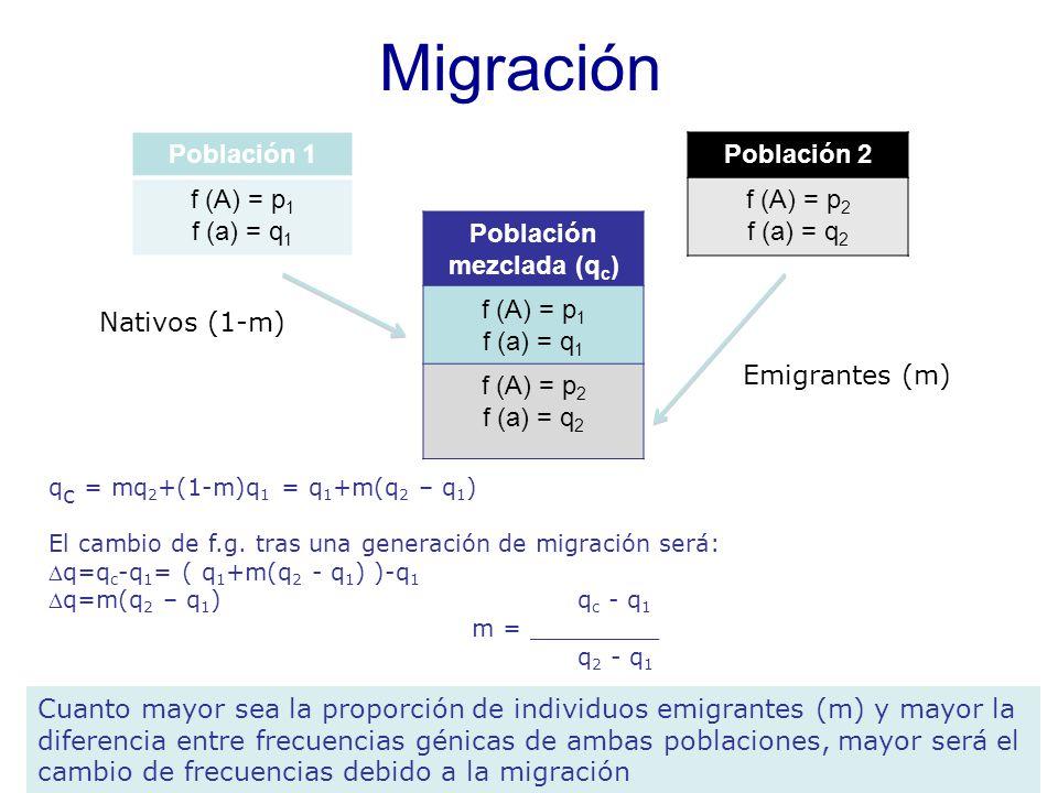 Migración Población 1 f (A) = p1 f (a) = q1 Población 2 f (A) = p2