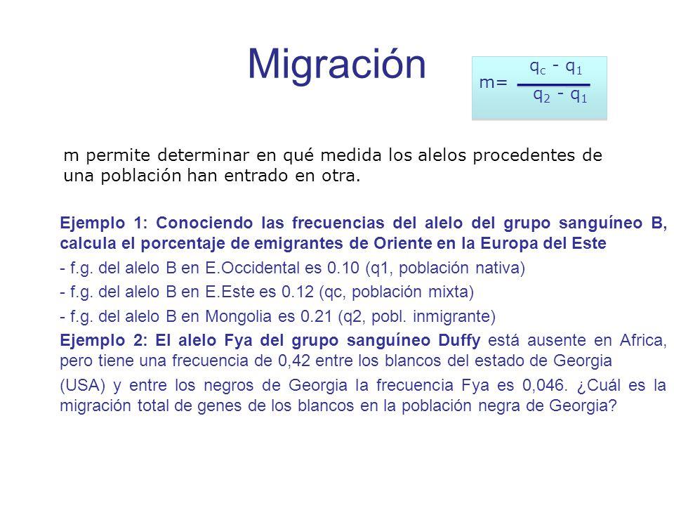 Migración m= qc - q1. q2 - q1. m permite determinar en qué medida los alelos procedentes de una población han entrado en otra.