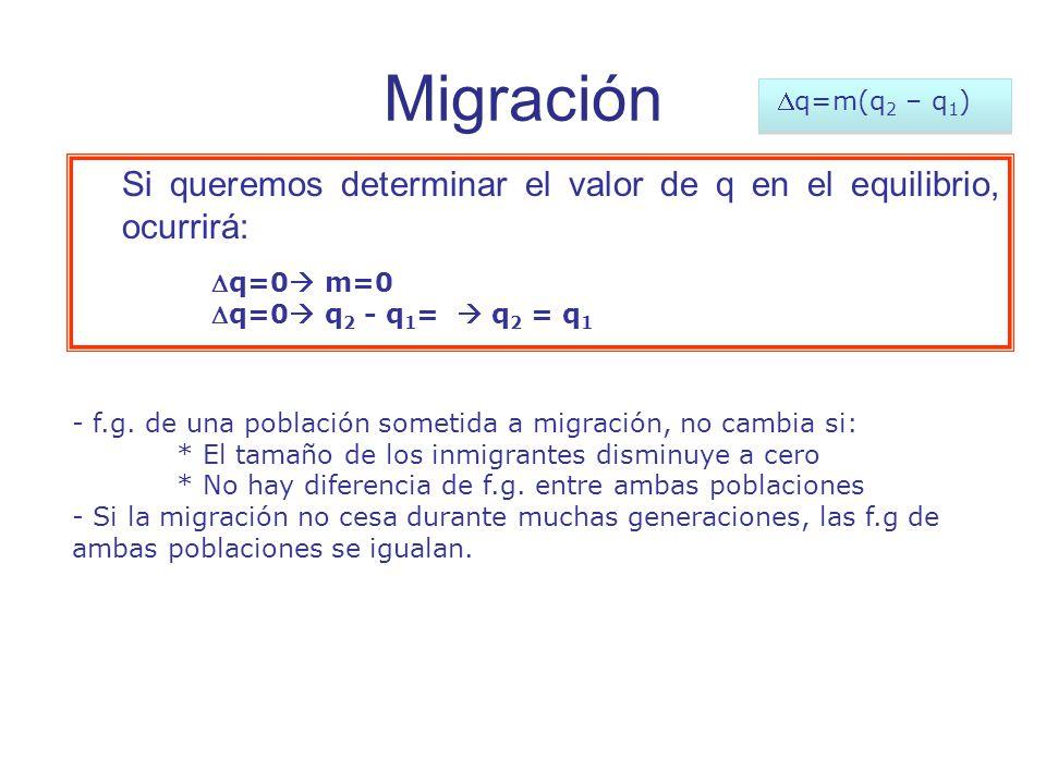 Migración Dq=m(q2 – q1) Si queremos determinar el valor de q en el equilibrio, ocurrirá: Dq=0 m=0.