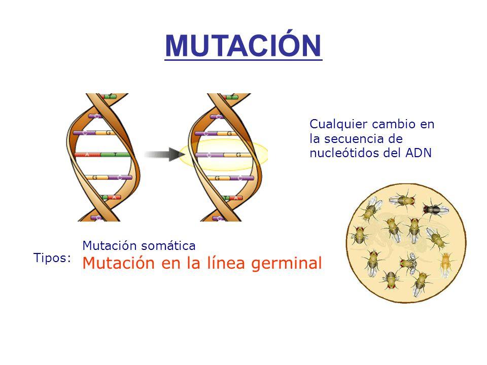 MUTACIÓN Mutación en la línea germinal