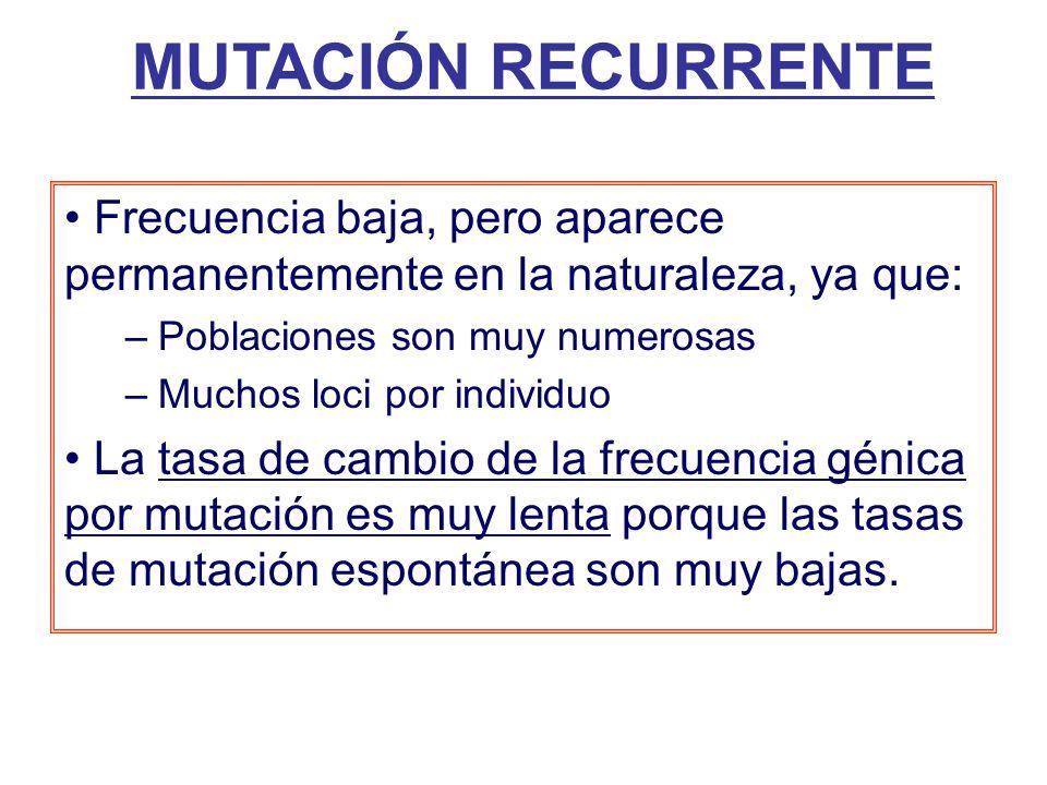 MUTACIÓN RECURRENTE Frecuencia baja, pero aparece permanentemente en la naturaleza, ya que: Poblaciones son muy numerosas.