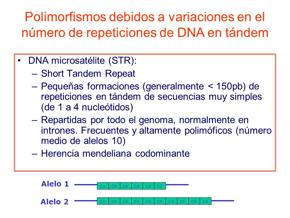Polimorfismos debidos a variaciones en el número de repeticiones de DNA en tándem