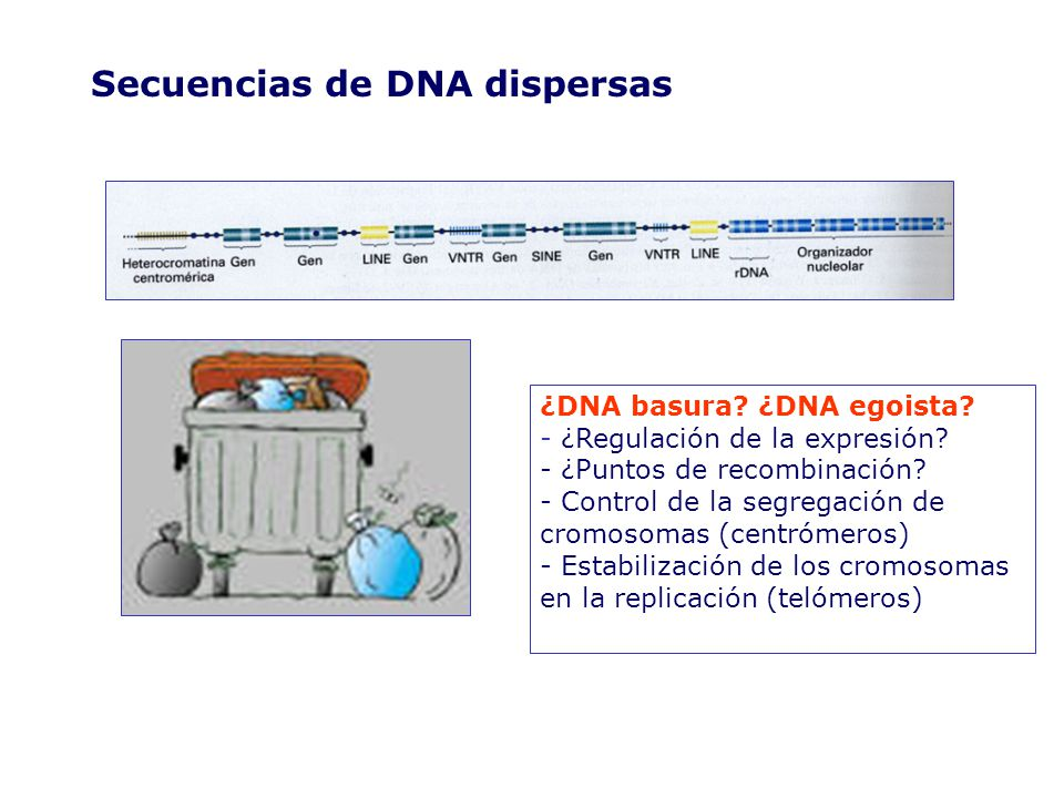 Secuencias de DNA dispersas