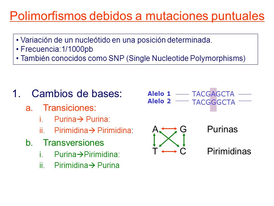 Polimorfismos debidos a mutaciones puntuales