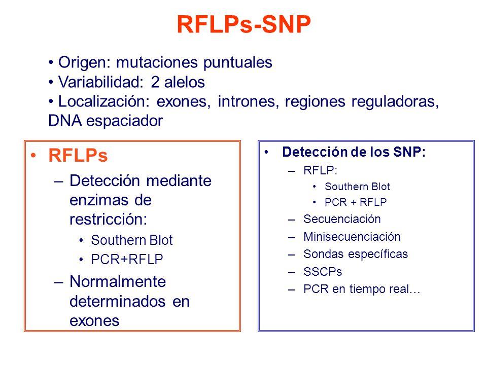 RFLPs-SNP RFLPs Origen: mutaciones puntuales Variabilidad: 2 alelos