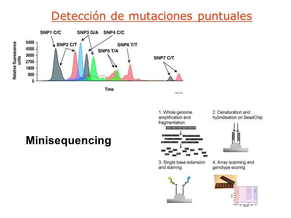Detección de mutaciones puntuales