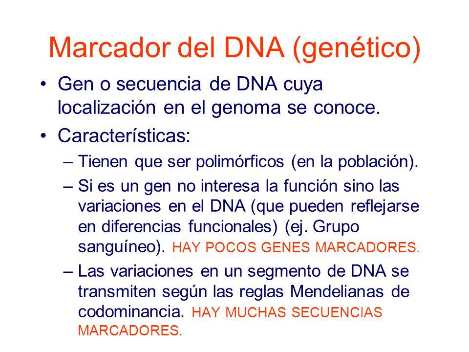Marcador del DNA (genético)