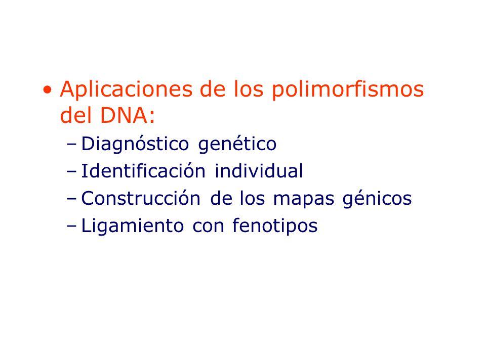 Aplicaciones de los polimorfismos del DNA: